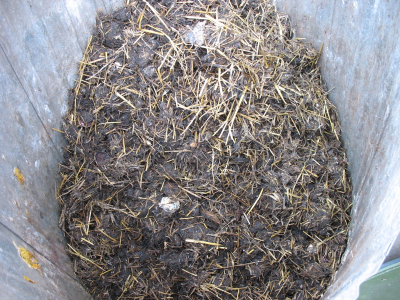 our compost pile