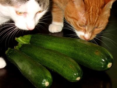 First zucchini of the season