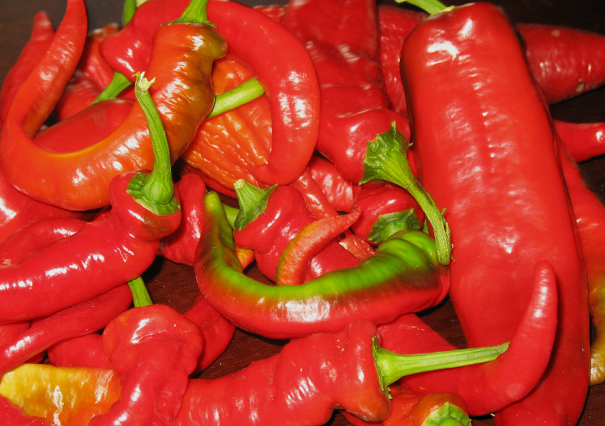 Jimmy Nardello's Sweet Italian Frying Pepper
