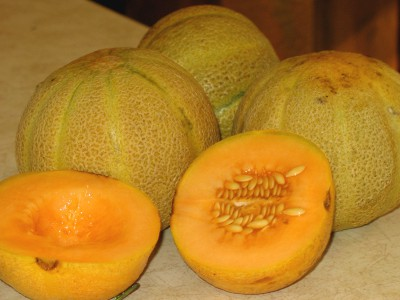 Cantaloupe - fresh picked from the garden!