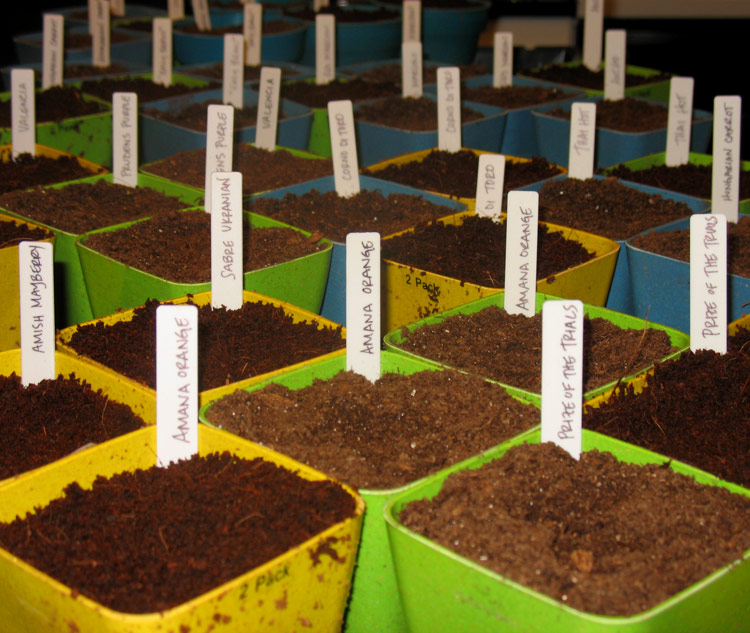 Peat Moss vs Coconut as a seed starting medium - a little experiment