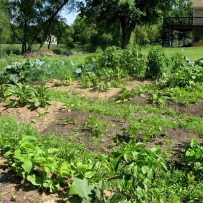 June 28th - Garden