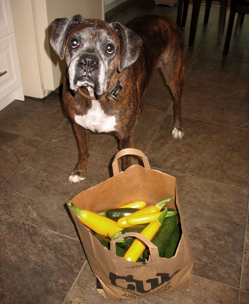 Puck's Zucchini