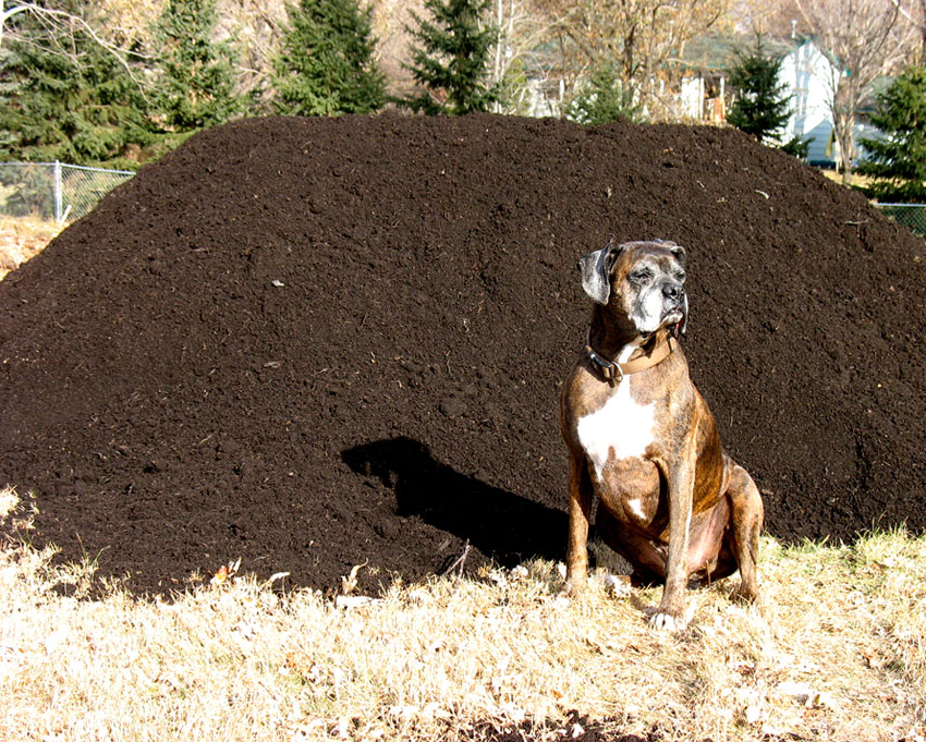 Puck and one truck load of compost