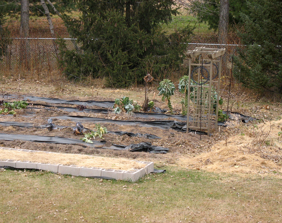 Fall 2011 - Garden