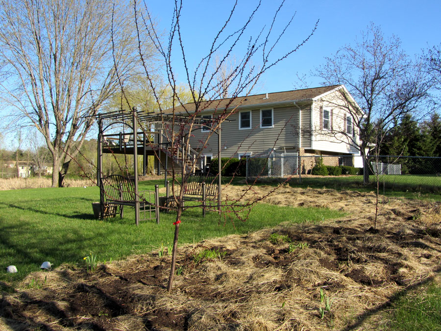 Apple Guild:  Nichols plum tree and Goldrush and Williams Pride apple trees
