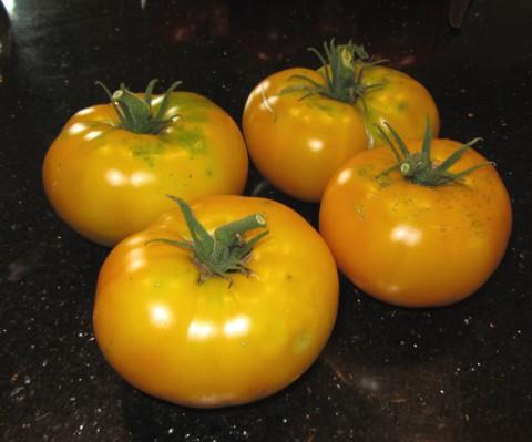 Azoychka Tomatoes