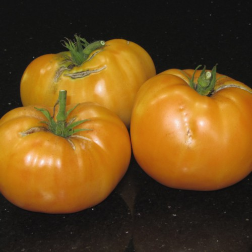 Persimmon Tomatoes