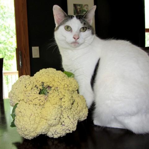 Kallie and Snow Crown Cauliflower