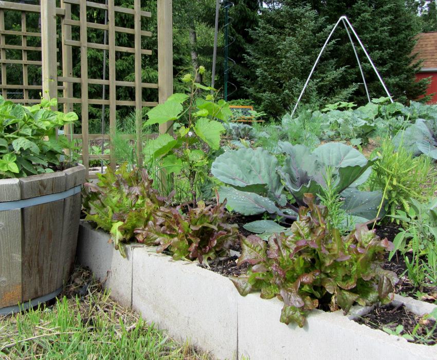 Garden Leaf Blocks : Lettuce update vegarden
