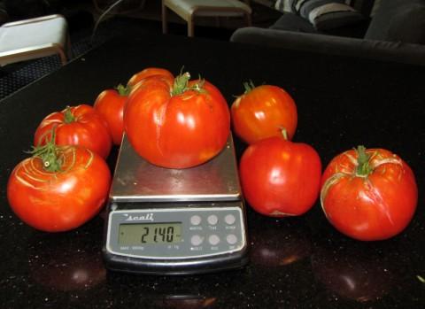Italian Heirloom Tomatoes