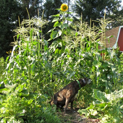 Puck with Sweet Corn