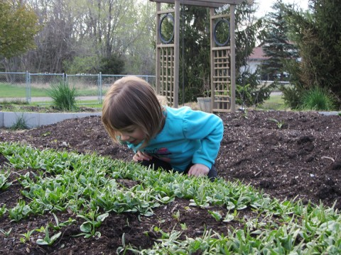 My niece picking spinach on April 20, 2012.