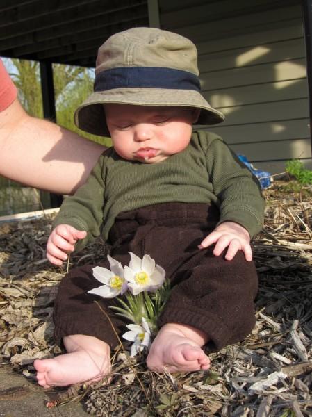 Cedar and Pasque Flowers