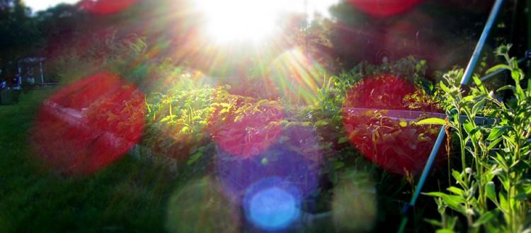 Strawberries and Sunshine