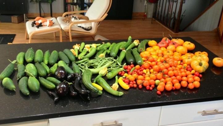 Garden Harvest - August 26th