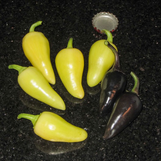 Santa Fe Peppers and Czechoslovakian Black Peppers