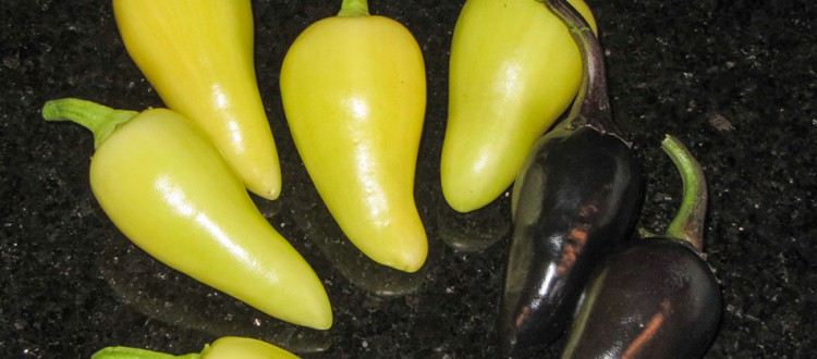 Santa Fe Peppers and Czechoslovokian Black Peppers