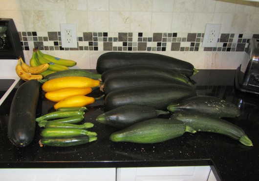 Giant pile of zucchini
