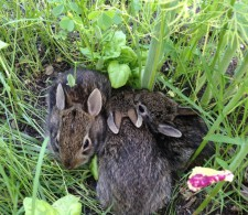 Apparently, we also grow baby bunnies...