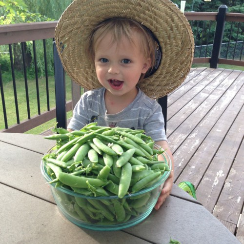 Picked the peas...