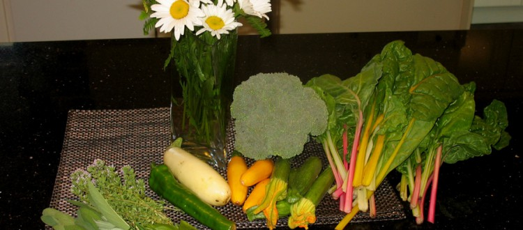 Herbs, small zucchinis, chard, broccoli, a white eggplant, green pepper, and daisies