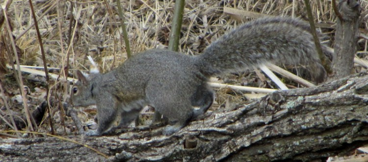14x Optical Zoom: Squirrel Pic