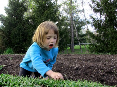 Picking and eating baby spinach leaves