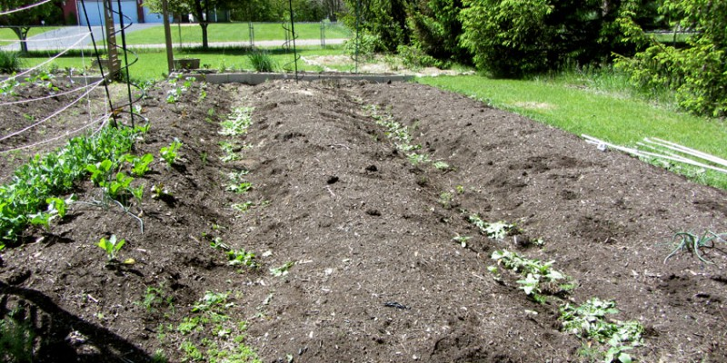 Weeded Rows