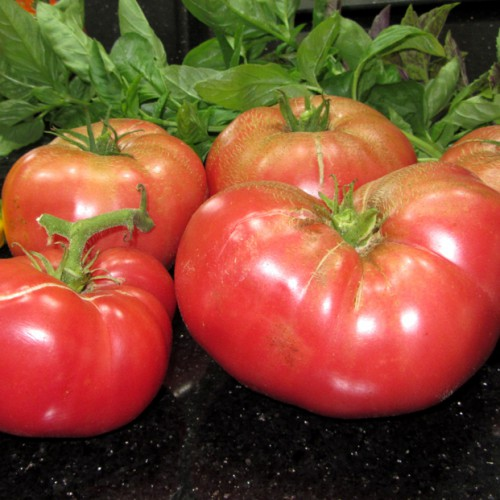 Mortgage Lifter Tomatoes