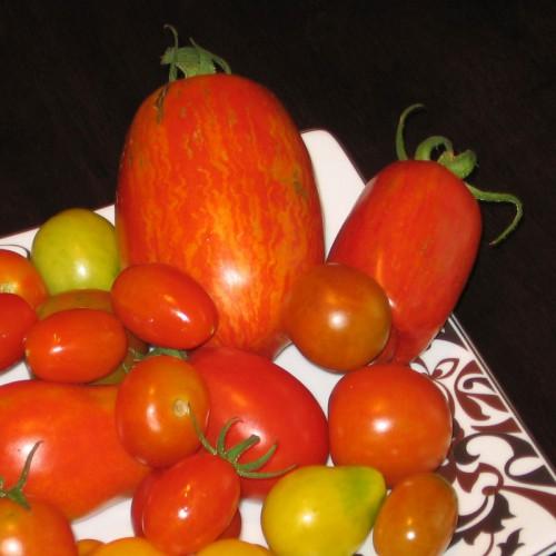 Sabre Ukranian Paste Tomato