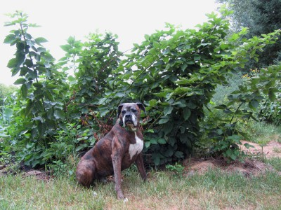 Puck and our Blackberries