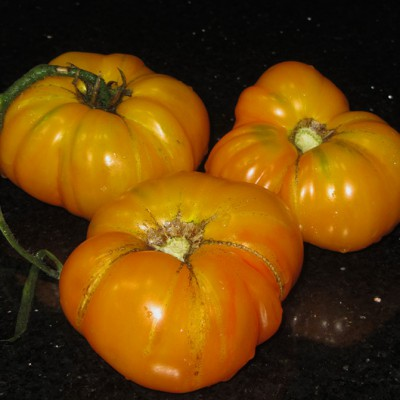 Marvel Striped Heirloom Tomatoes
