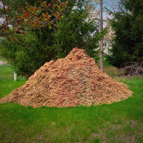 We got two piles this size of (free!) wood chips for the garden this year!