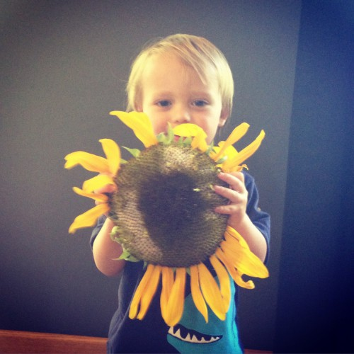 Picked a giant sunflower...
